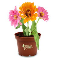 MEDIUM Terra Cotta Planter Kits - Grow Flowers and Herbs at Your Desk