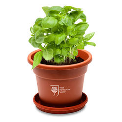 Large Terra Cotta Planter Kits - Grow Flowers and Herbs at Your Desk